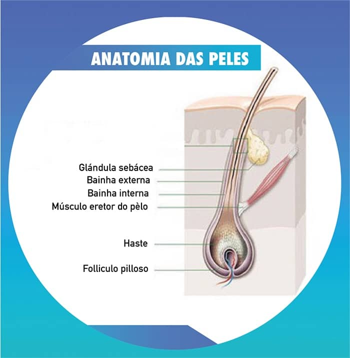 anatomia das peles