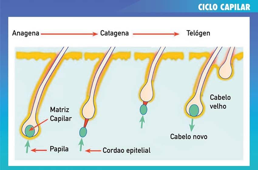 CICLO CAPILAR