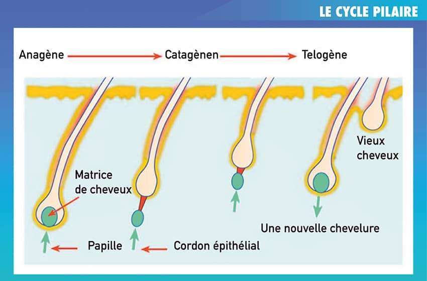 LE CYCLE PILAIRE
